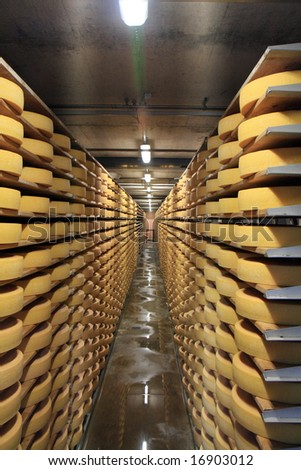 Row upon row of cheese stacked up in the cellar to mature. - stock photo