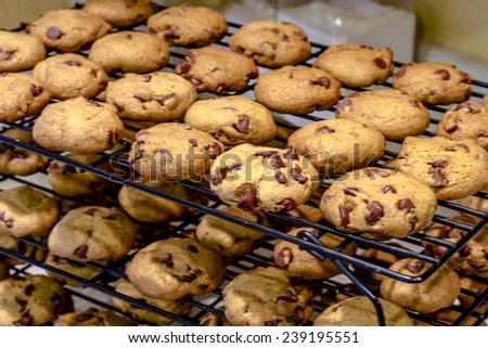 Rows of chocolate chip cookies cooling on wire baking rack sitting on counter top - stock photo