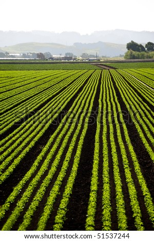 Rows of freshly planted lettuce in the Pajaro Valley of California - stock photo