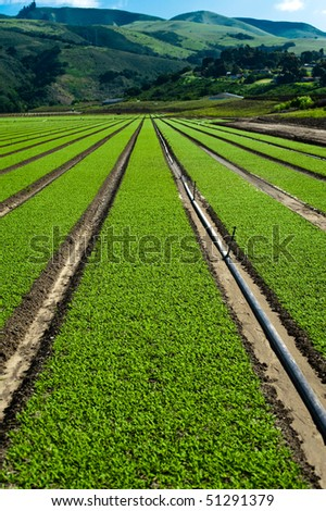 Rows of freshly planted spinach in the Parajo Valley of California - stock photo