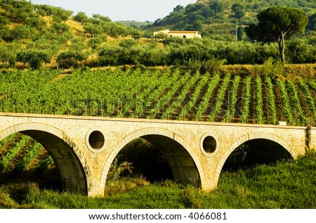 Rows of grapevines on a hillside vineyard in the summertime - stock photo