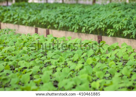 Rows of green plant seedlings in hothouse. Cultivated sprouts in rich soil were grown under the sun in glasshouse, macro close up with shallow depth of field and no models - stock photo