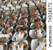 Rows of mushrooms at the Sacramento Farmers Market - stock photo