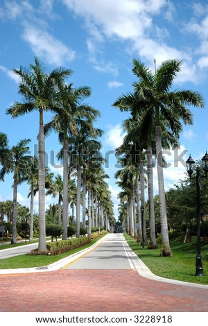 Rows of palm trees along a road - stock photo