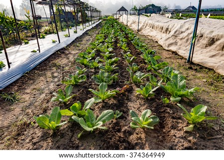 Rows of plants in a cultivated farmers field - stock photo
