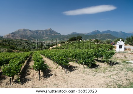 rows of plants of grapevine and white memorial road of Wine Roads in Nemea, Greece - stock photo
