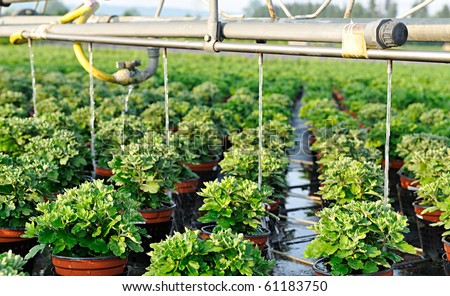 rows of pots with green plants in a greenery - stock photo