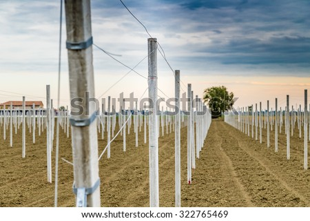 rows of precast concrete white poles driven into the ground to support the fruit trees in plowed fields in modern agriculture