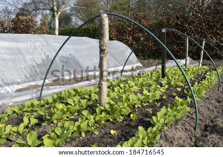 Rows of radishes and lettuce in a breeding tunnel in the organic vegetable garden Groentenhof in Leidschendam, Netherlands. - stock photo