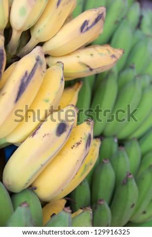 Rows of ripe yellow bananas and Green bananas - stock photo