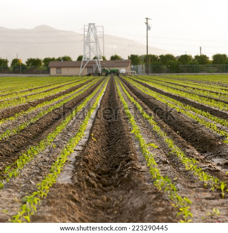 Rows of seedlings, farmland with tractor in the distance