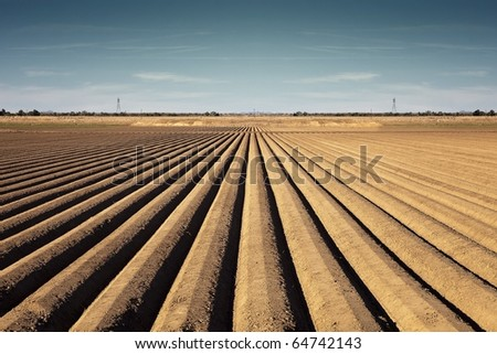 Rows of Soil