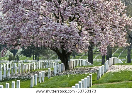 Rows of tombstones at Arlington National Cemetery - stock photo