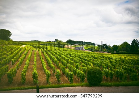 Rows of vineyard grape plants with cloudy sky in Saint Emilion, France, Aquitaine region