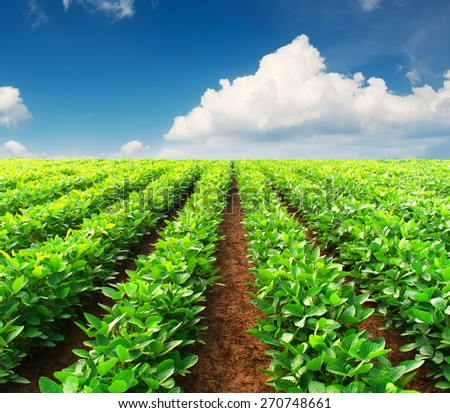 Rows on field. Agricultural composition - stock photo