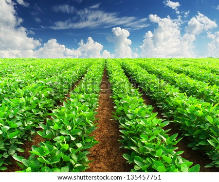 Rows on the field. Agricultural landscape - stock photo