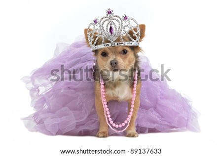 Royal dog with crown isolated - stock photo