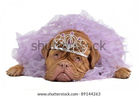 Royal dog with crown isolated