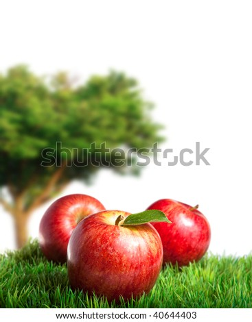Royal gala Apples on Grass with an Apple Tree in the background - stock photo