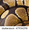 Royal Python, or Ball Python (Python regius). Scales of a snake as a background. - stock photo