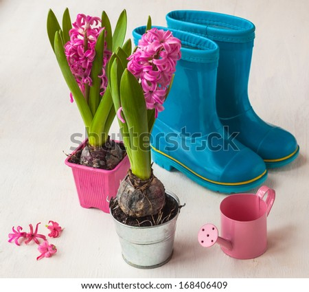 Rubber boots, pink hyacinths and watering can on the table