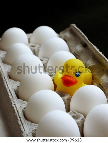 Rubber duck in tray of white eggs - stock photo