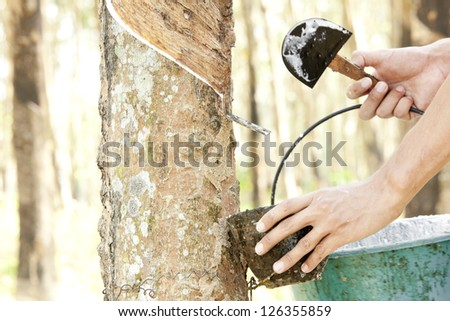 Rubber Plantation (Hand picking up the rubber milk) - stock photo