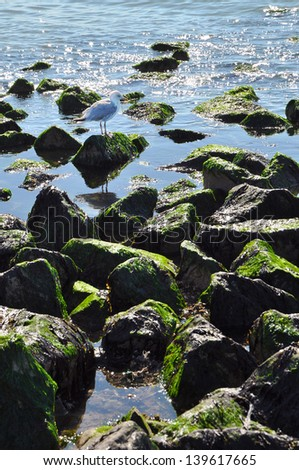 Rubble mound breakwater - A breakwater with an European Herring Gull on the shore of Holland - stock photo