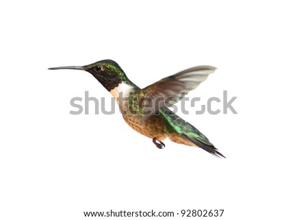 Ruby-throated Hummingbird (archilochus colubris) in flight isolated on a white background - stock photo