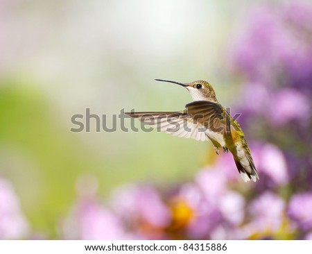 Ruby throated hummingbird in motion in the garden.