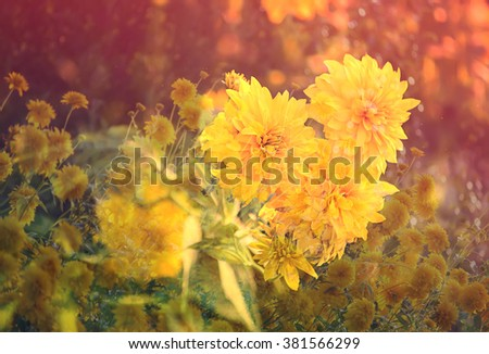 Rudbeckia flowers. Vintage floral background. Layer overlay effect.