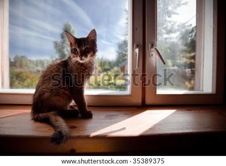 Ruddy somali kitten seating on a windowsill - stock photo