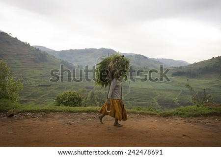 RUGEZI, RWANDA - SEPTEMBER 2008: A woman carrying fodder on her head. Rwanda today is a story of renewal and rapid economic development; only 20 years ago the country was torn apart by the genocide.
