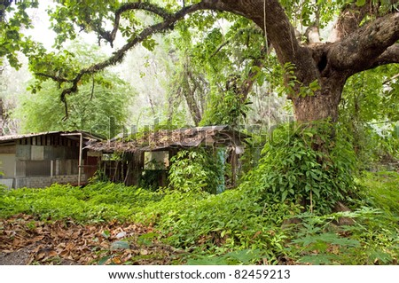 Ruin of a small hut covered by encroaching jungle