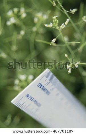 Ruler on plants measuring the growth - stock photo