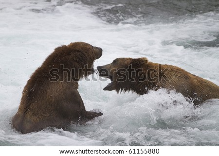 Rumble in the Riffles - Two male grizzly bears fight on the Brooks river, Katmai National Park, Alaska. - stock photo