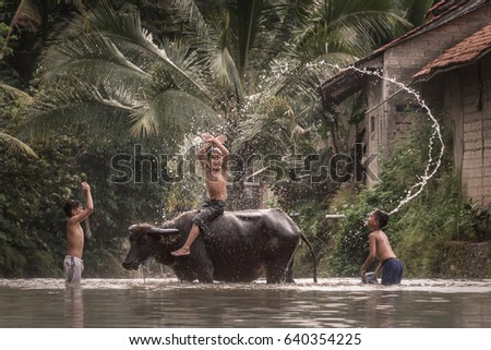 Rumpin, Bogor, Indonesia - April 16, 2017 : Boys playing as they wash a water buffalo in the river