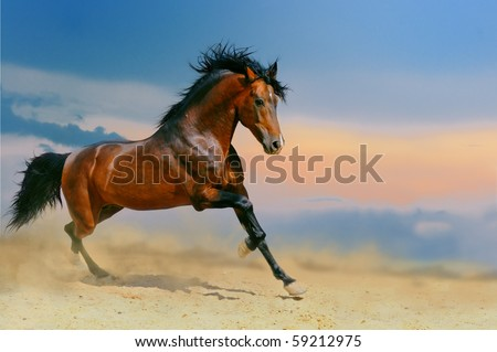 Running bay horse in the desert - stock photo