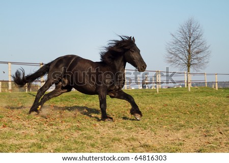 Running black horse - stock photo