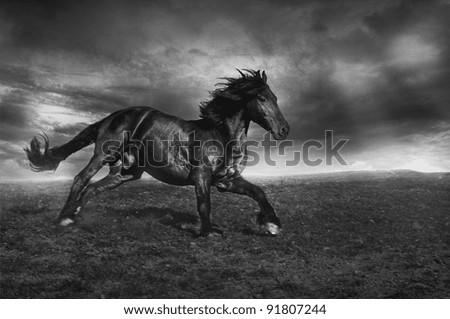 Running black horse - stock photo