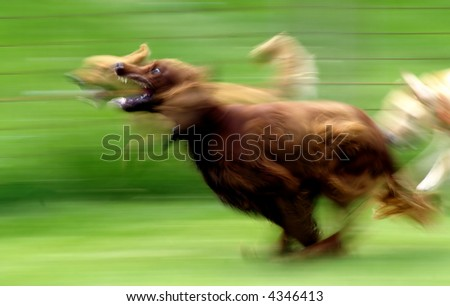 Running Dog, motion blur - stock photo
