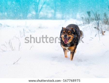 Running dog on a snowy field - stock photo