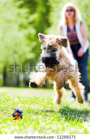 Running dog on green grass and ball