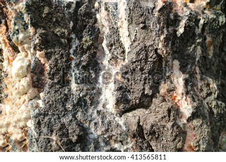 running down the bark resin.It looks like a rocky mountain with waterfalls - stock photo