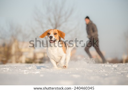 Running during winter training outside in cold snowy weather with beagle dog. - stock photo