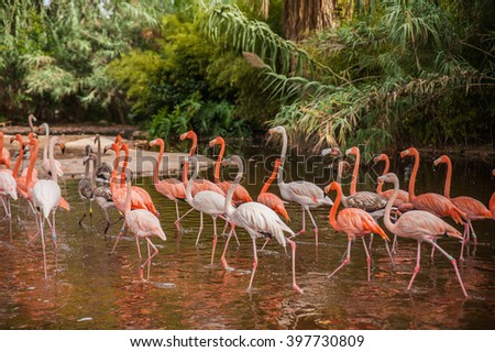 Running flamingos in the zoo