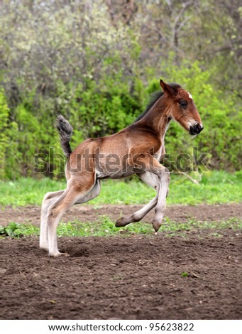 Running foal in nature background