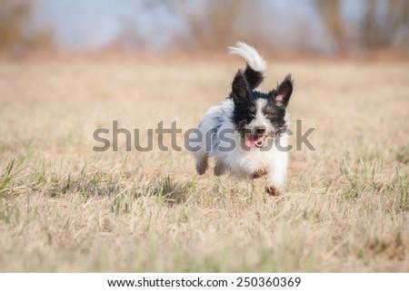 Running happy dog - stock photo