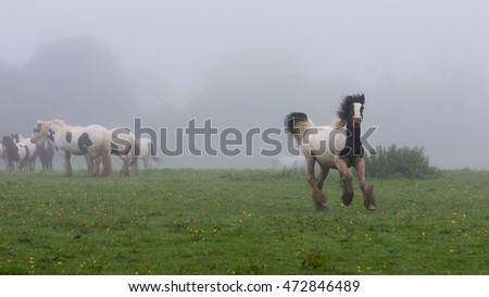 Running horse and horsed grazing in grass field on misty morning.