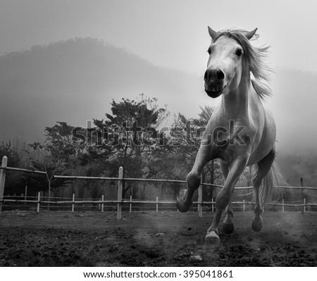 Running Horse Black and White - stock photo